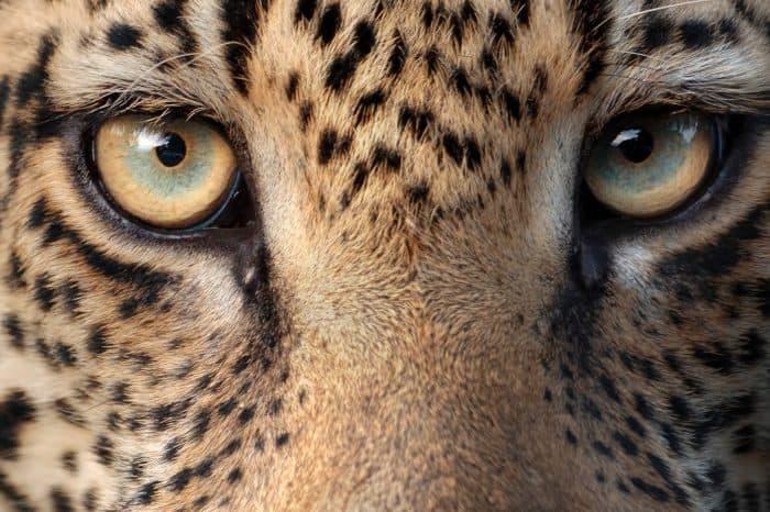 Kruger National Park – Leopard Photo Safari