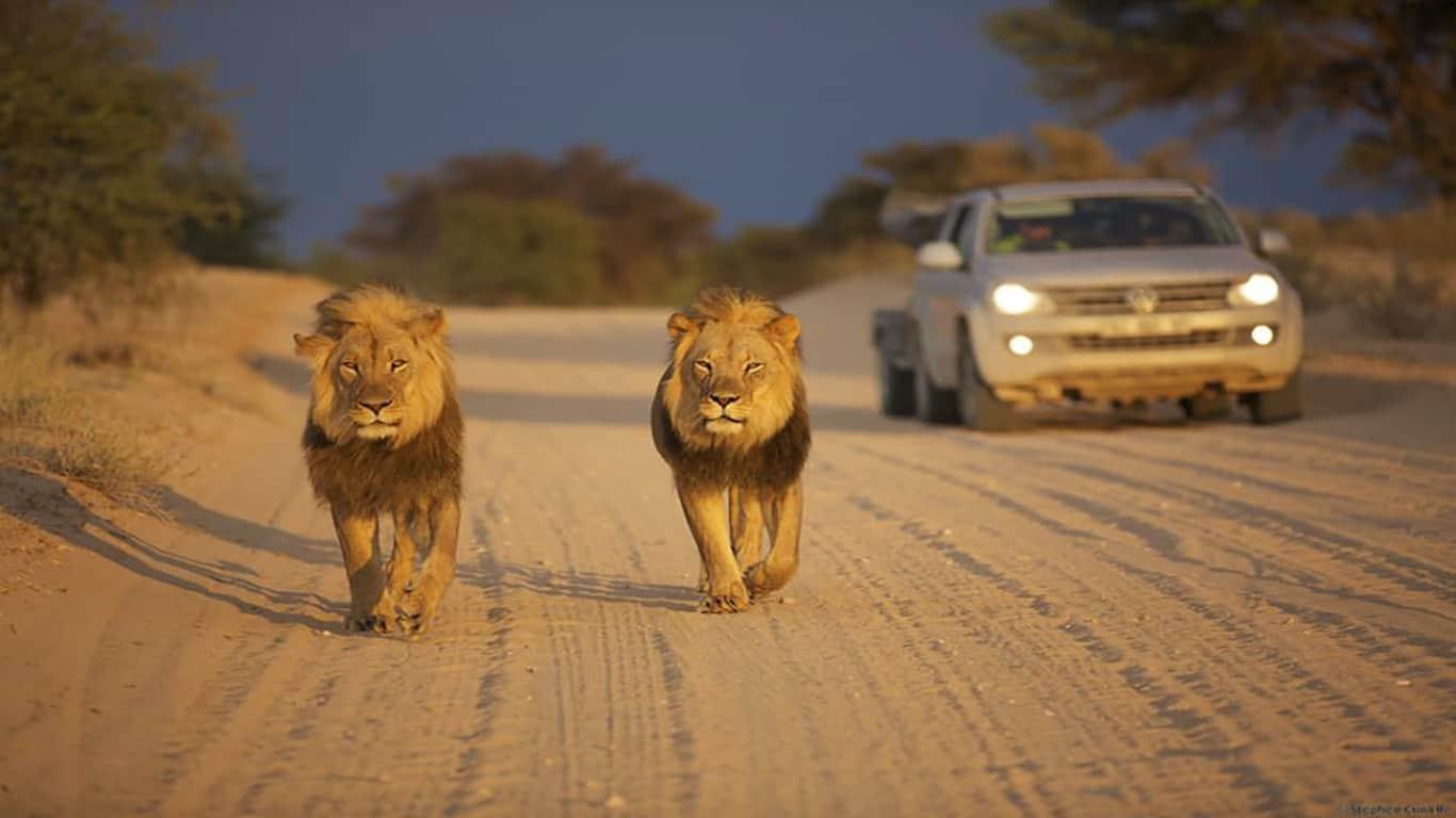 Viaggio fotografico Sudafrica – Kgalagadi