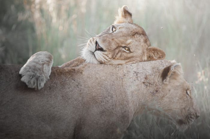 Viaggio fotografico Kruger National Park – Big Five Photo Safari