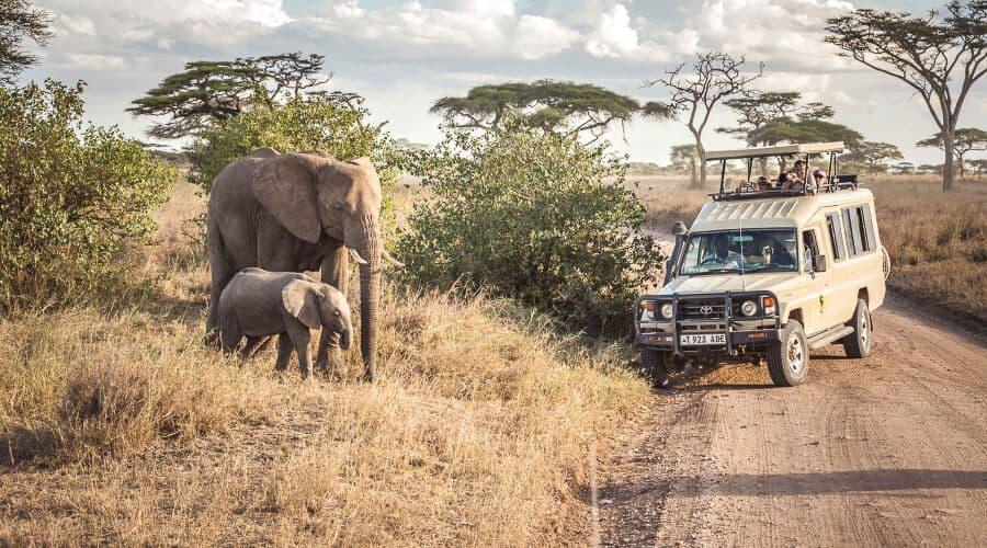 Tanzania Great Migration