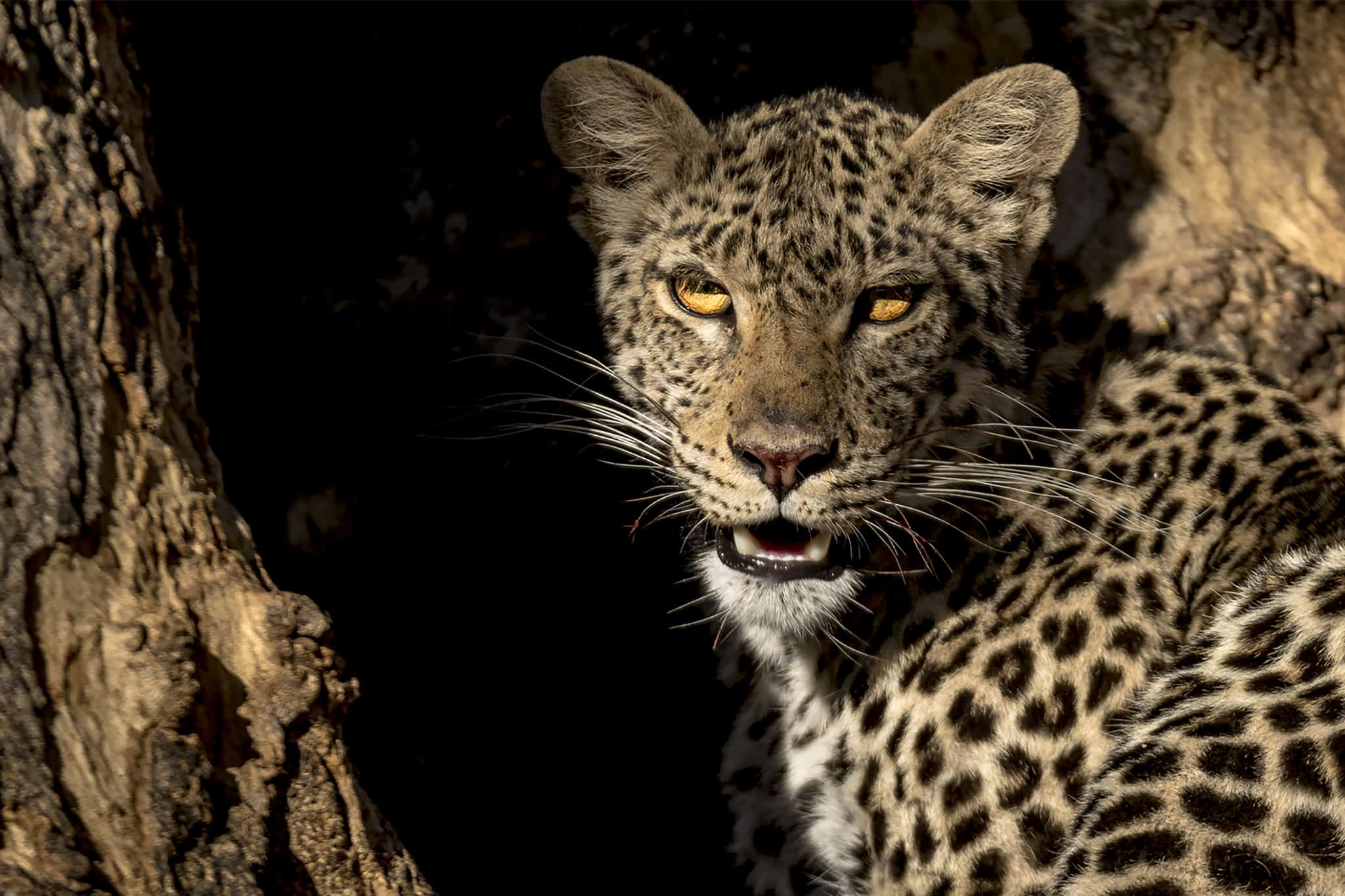 Sudafrica e Botswana - Predators Photo Tour