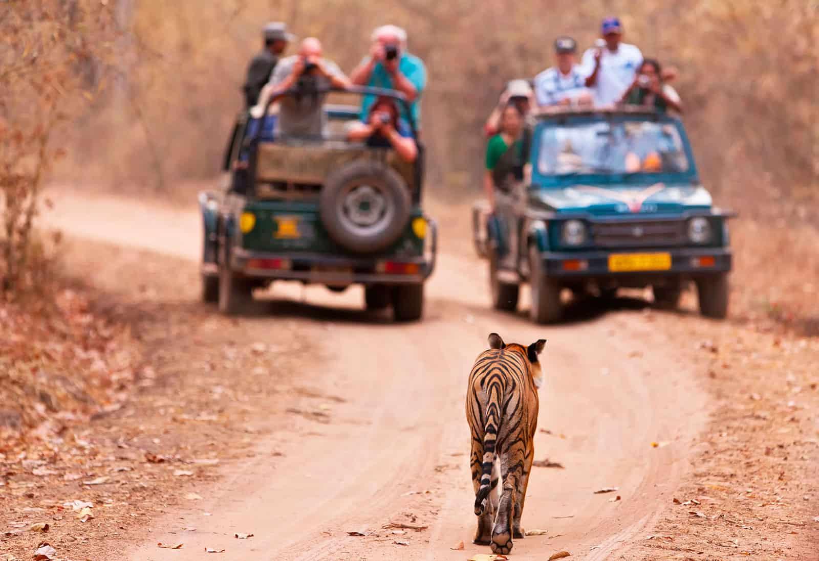 Viaggio fotografico India