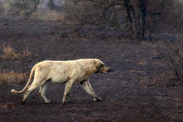 Viaggio fotografico Kruger National Park e Manyeleti Game Reserve Big Cats Experience
