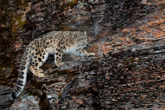 Viaggio fotografico India – Leopardo delle nevi Expedition