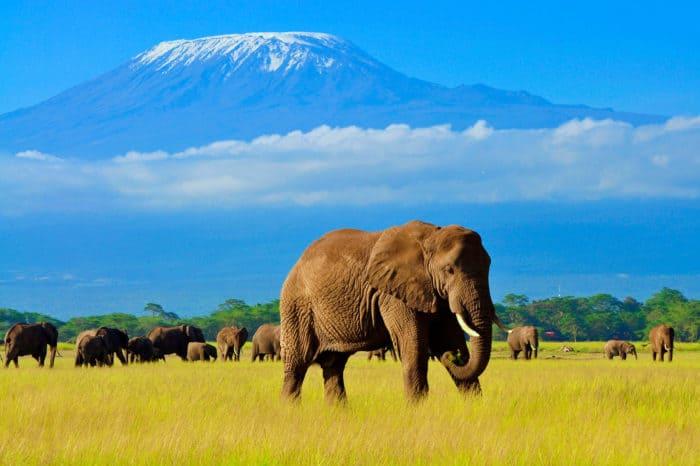 Viaggio fotografico Kenya – Exclusive Safari – Tsavo Est, Tsavo Ovest, Amboseli